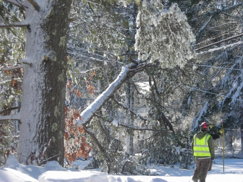 A downed tree blocks an entire street and takes down power lines in Kingston, MA